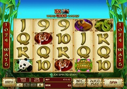 Lucky Panda Slots - Play Playtech Casino Games Online